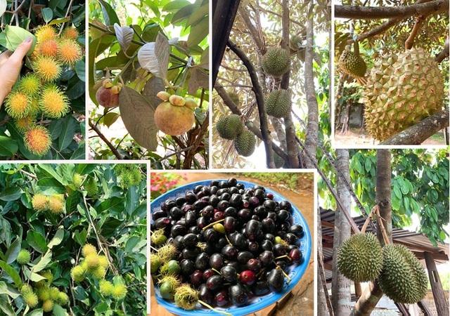 vườn trái cây tại Tây Ninh